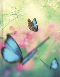 Blankbook Tushita, blauwe vlinders