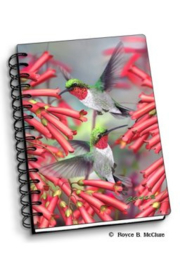 3D schriftje Hummingbird met spiraal