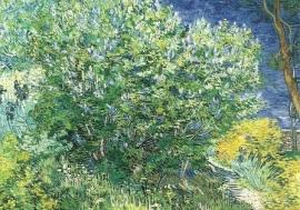 Seringenstruik, Vincent van Gogh