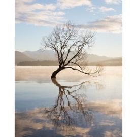 Blankbook Tushita, Lone tree