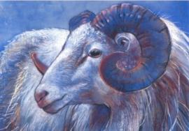 Ram II, Loes Botman