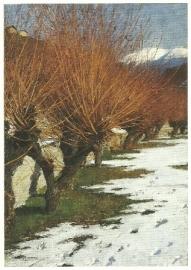 Weiland in winterzon, Alexander Koester