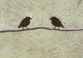 Vogelgesprek