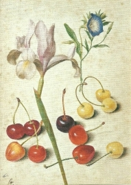 Kersen, iris en winde, Georg Flegel