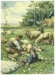 Schapen scheren, Cornelis Jetses