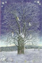 Het verhaal van de boom, Elisabeth Heuberger