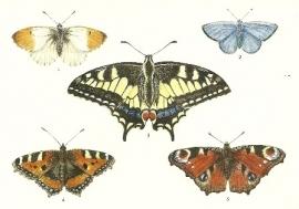 Vijf vlinders, Lars Klinting