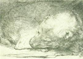 Slapend hondje, Rembrandt
