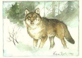 Wolf, Ingvar Björk