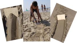 Zandkammen (set van 5 verschillende)