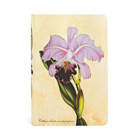 Brazilian Orchid Mini, notebook Paperblanks