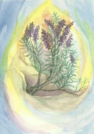 Lavendel, Margret von Borstel