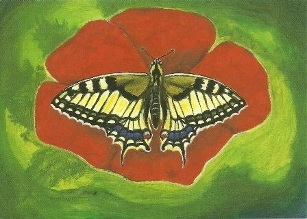 Vlinder op rode bloem, Heike Stinner