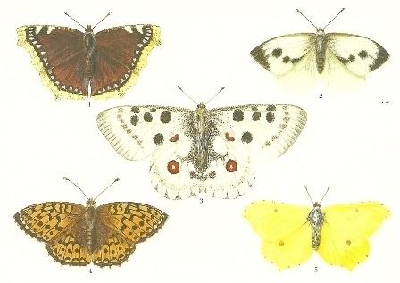Vlinders 1, Lars Klinting