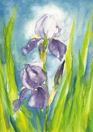 Iris germanica, Marjan van Zeyl