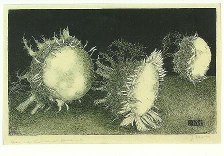 Distelbloemen, litho, Jan Mankes