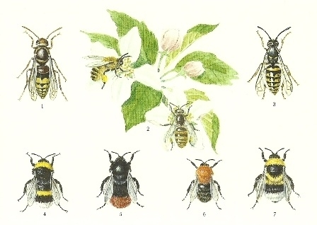 Zeven bijen en hommels, Lars Klinting