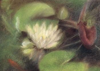 Waterlelie, Marjan van Zeyl