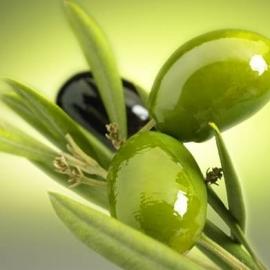 Frantoio/Lectina biologische olijfolie, 250 ml, l'Olpe di Marco