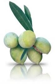 Biancolilla, biologische olijfolie EV, 250 ml, L'Olpe di Marco
