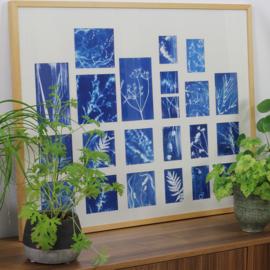 Maak je eigen fotogrammen / cyanotypes