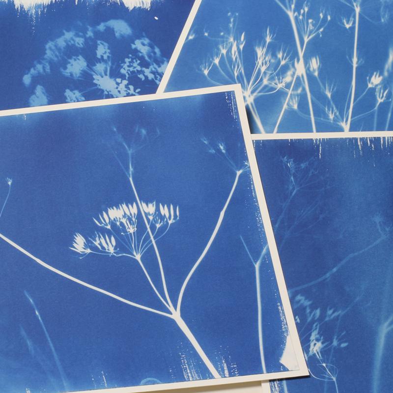 Maak Je Eigen Fotogrammen Cyanotypes Workshops