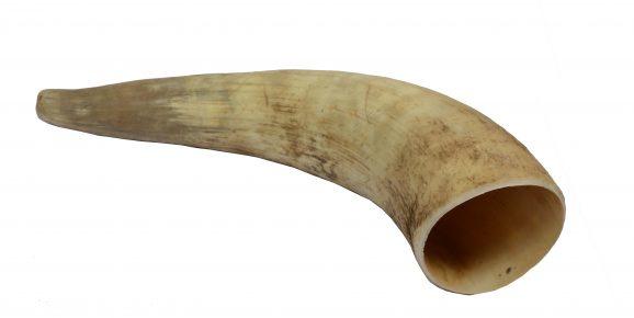 Cattle Horn M