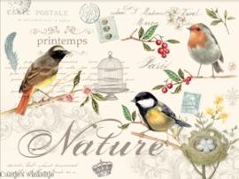 Kunststof placemats (4) vogels Nature