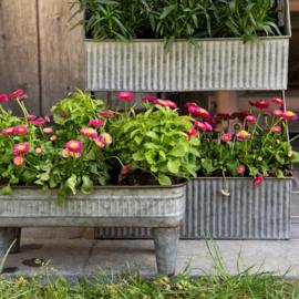 Plantenbakken en hangers