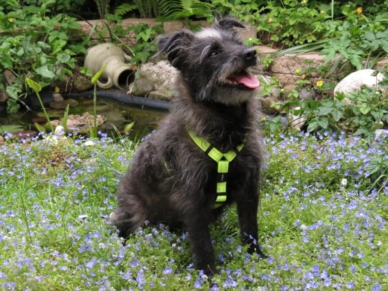 Rogz for Dogs Tuigje Reflecterend