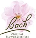 Bach Bloesem