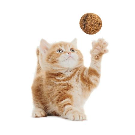 Natuurlijke Kattenkruid Snackbal