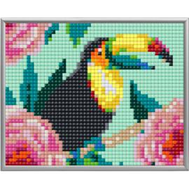 Pixel XL Toekan 1