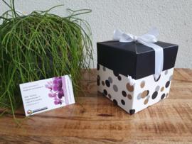 Luxe cadeaudoosje + 25 waxxies