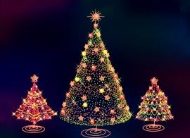 Kerstbomenbos