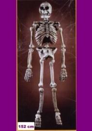 Skelet plastic 152 cm.