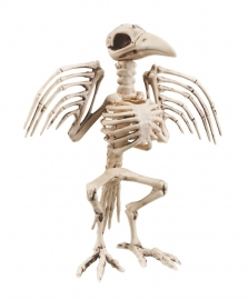 Scary big crow skeleton