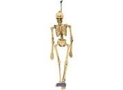 Skelet Hangdecoratie
