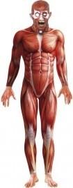 Anatomy pak