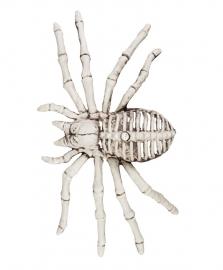 Spinnen skelet 12 x 24 cm