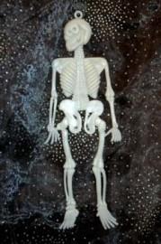 Mini Skelet