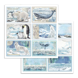 Stamperia - Arctic Antarctic - Paper - 30,5 x 30,5 cm. - Cards