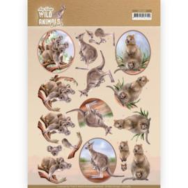 3D Cutting sheet - Amy Design - Wild Animals Outback - Kangaroo