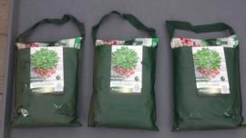 Pokonhangtuintje met aardbeiplanten