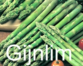 Gijnlim aspergeplanten voor groene asperge F1 Hybride
