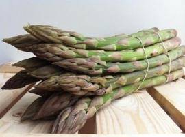 Aspergeplanten voor groene asperge F1 Hybride