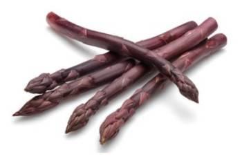 Erasmus paarse asperge Zware planten TIP