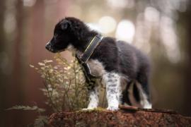 Verstelbaar Puppy tuig