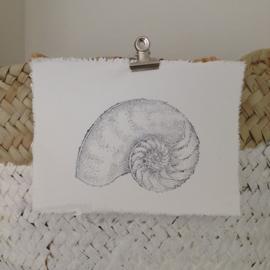 Afro Dutch Paperstone kaart - Nautilus Schelp