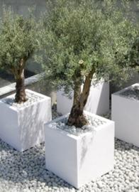 Polyester plantenbak 700x700x700